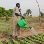 Mali Starts Using EchiTAb-Plus-ICP